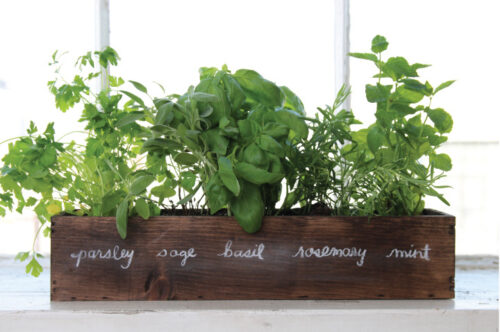 Container of herbs on your window sill