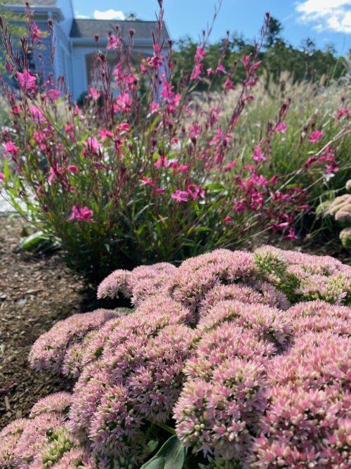 Remby Garden 3